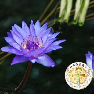 Blue Lotus 5mlブルーロータス