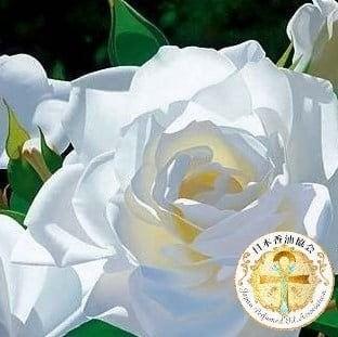 銀行振込専用※White Rose 10mlホワイトローズ