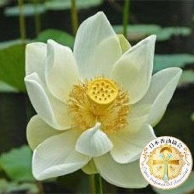 White Lotus 5mlホワイトロータス
