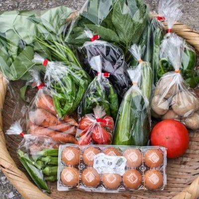子どもに食べさせてあげたい! 無肥料・完全無農薬の季節の野菜セット M 大分産