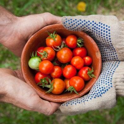 食と生活リズムの健康カウンセリングウェブチケット