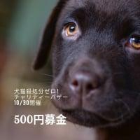 【岡山犬猫殺処分ゼロ!募金】WEBチケットで募金/個人で保護ボランティア活動をしている方たちへ/大切に確実にお届けします!