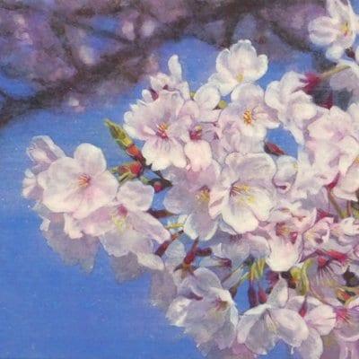 【日本画】佐藤宏三画伯 「桜花」No.1