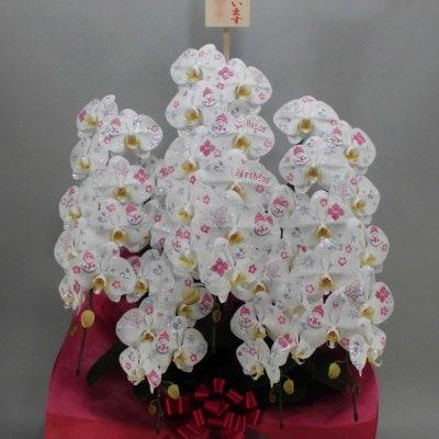 化粧蘭5本立ちゴールド