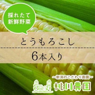 【桃川農園】とうもろこし(ゴールドラッシュ)6本セット【新潟より直送】