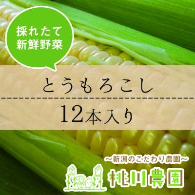 【桃川農園】とうもろこし(ゴールドラッシュ)12本セット【新潟より直送】