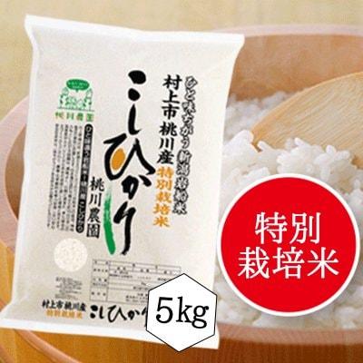 【令和元年村上市桃川農園産の新米】特別栽培米桃川産こしひかり精米【5キロ】