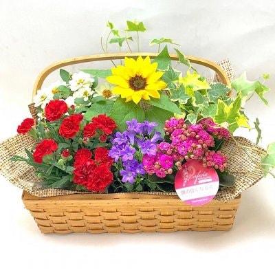今年の5月は毎日母の日|花|フラットバスケット|鉢物|