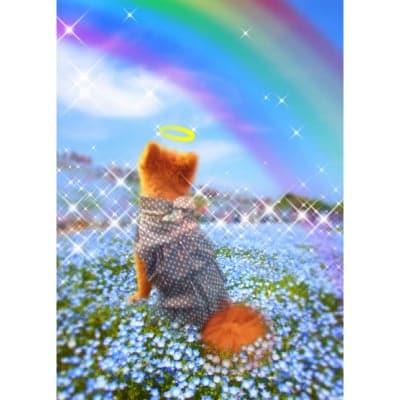 かなつ久美オリジナルデジタル合成フォト「虹の橋・あの子がいる世界」※デジタル入稿
