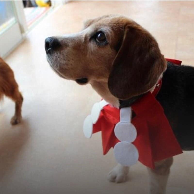 犬の殺処分を無くし継続していく為の支援募金のイメージその2