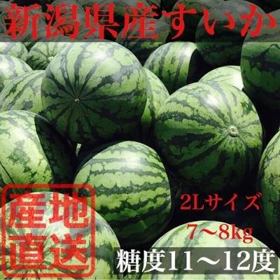 受付終了‼︎直接手渡しできる方専用!!【限定予約販売】新潟県産すいか 2L(7〜8kg)