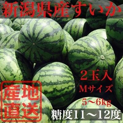 【限定予約販売】新潟県産すいか M(5〜6kg)2玉入
