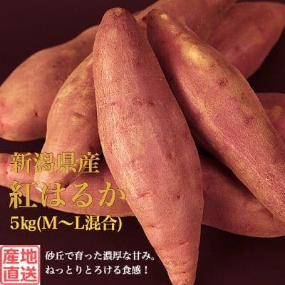 販売終了‼︎【秀品】新潟県産さつまいも5kg(M~L混合)