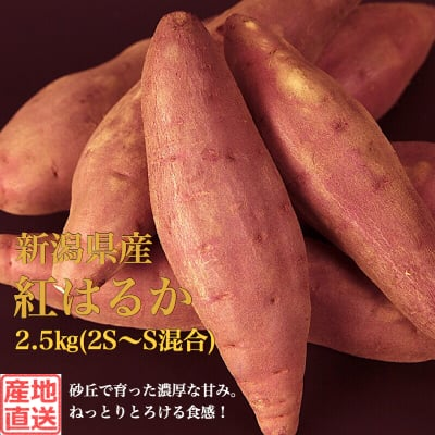 【秀品】新潟県産さつまいも2.5kg(2S~S混合)
