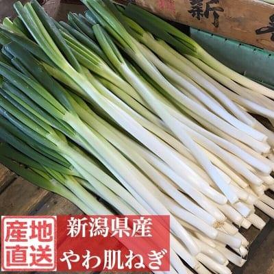 販売終了‼︎新潟県産やわ肌ねぎ5kg