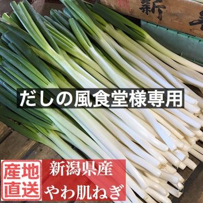 【だしの風食堂様専用】新潟県産やわ肌ねぎ