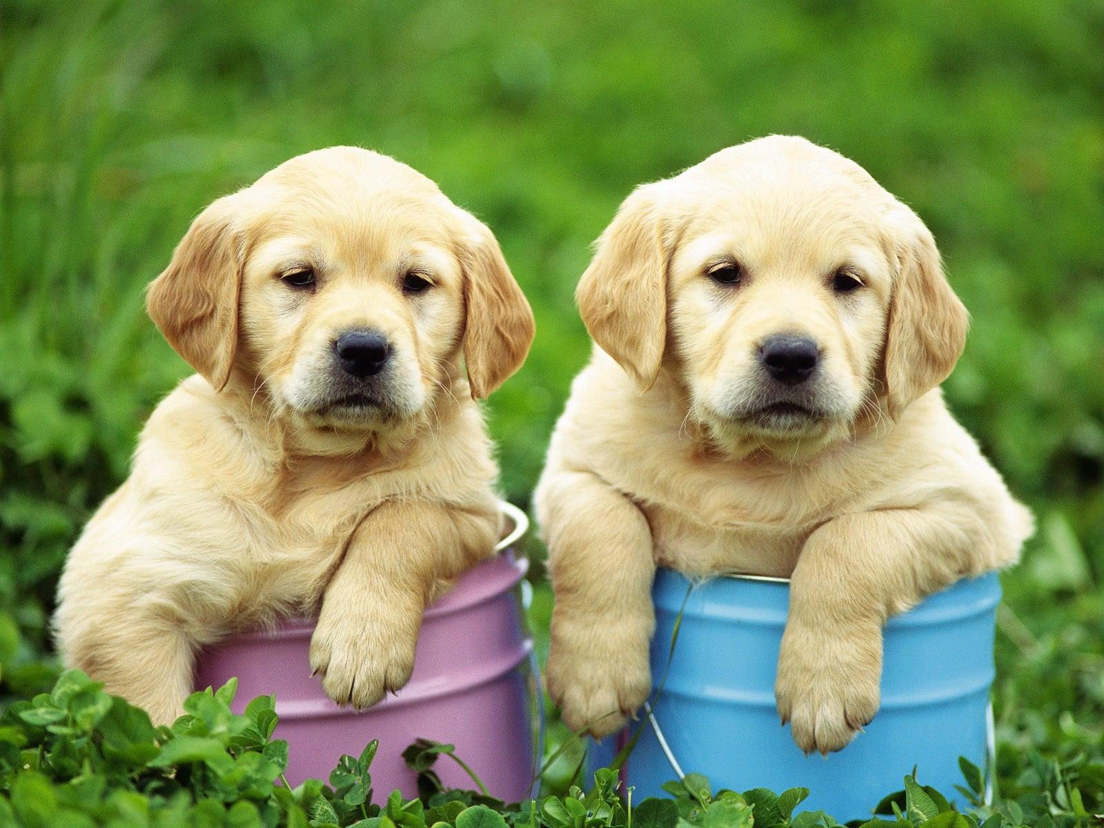 [複製]笠井愛犬訓練所ペット預りチケット(送迎付)中型犬用(成犬10kg以上25Kg未満)のイメージその1