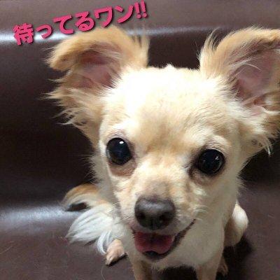 わんちゃんオンラインお悩み相談室 30分