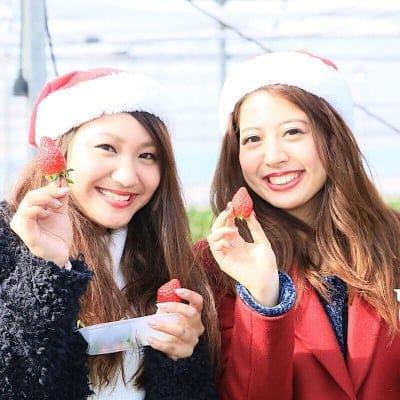 【12/29~12/31】いちご摘み入園料小学生以上70歳未満