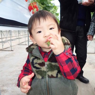 【3/1~3/8】いちご摘み入園料3歳から未就学児、70歳以上