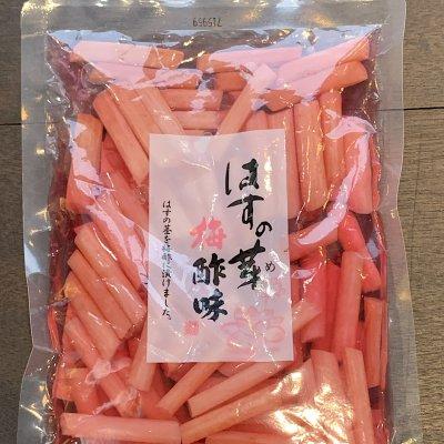 【うなぎ会専用商品】はすの芽 梅酢味 | はすの芽を梅酢に漬けました。