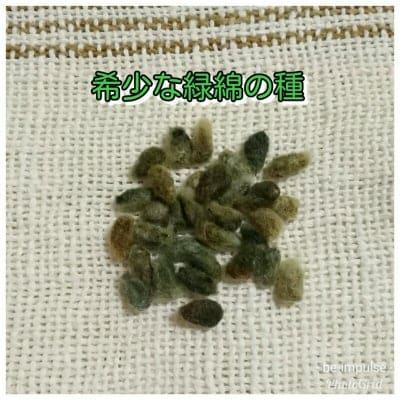 希少な緑綿の種30粒