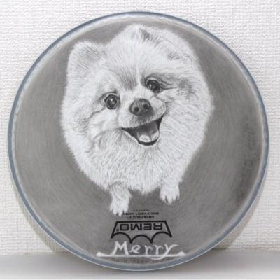 チャリティー!世界にたった一つ!ペットの似顔絵 Mサイズ 12インチ 日本初 ドラムアート ドラムヘッド プレゼントに最適!