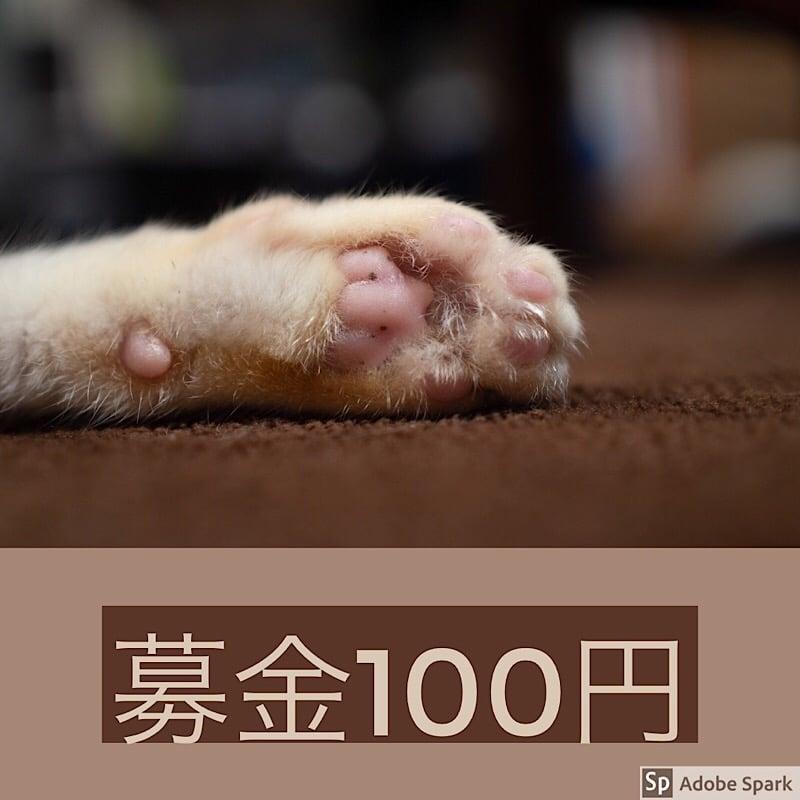 ☆ねこ募金100円チケット☆のイメージその1