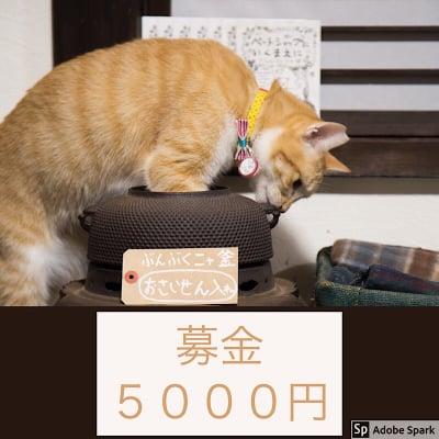 ☆ねこ募金5000円チケット☆
