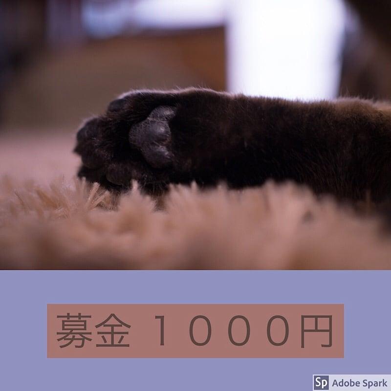 ☆ねこ募金1000円チケット☆のイメージその1