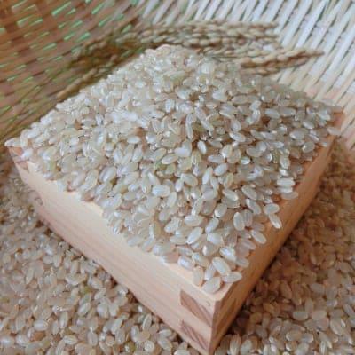玄米精米可【農薬化学肥料不使用】加古さんの兵庫県産ヒノヒカリ 5kg