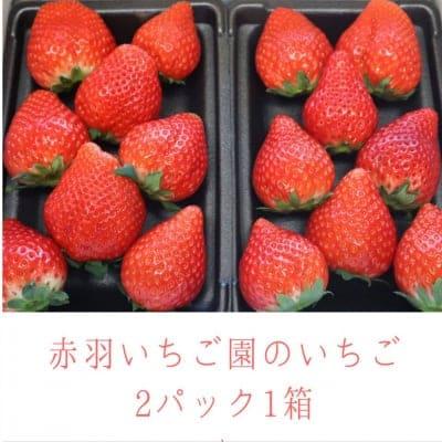 赤羽いちご園のいちご2パック1箱
