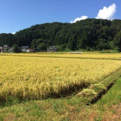 【美味しいお米をお探しならお試しください】山のてっぺんで育てた減農薬コシヒカリ5kg