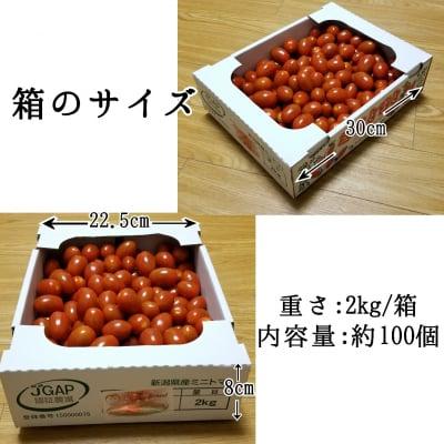 特質性のあるアートテン極うまミニトマト2kg箱 (5箱まで送料一律)の画像6