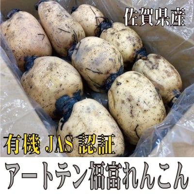 【有機JAS認証】アートテン福富れんこん1.5kg箱