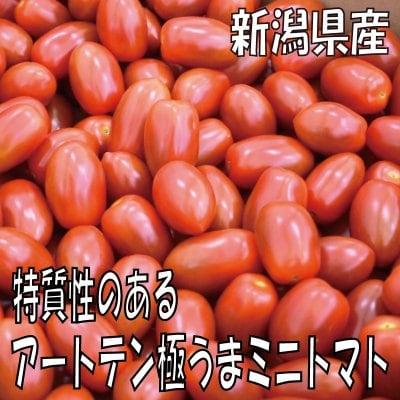 【遂に出荷開始!!】特質性のあるアートテン極うまミニトマト2kg箱 (5箱...