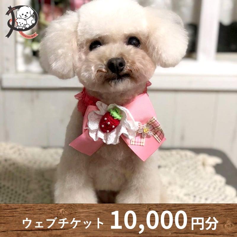 【リップ専用】10,000円分チケットのイメージその1