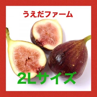 【送料無料】完熟いちじく(2Lサイズ)奈良片桐のうえだファーム