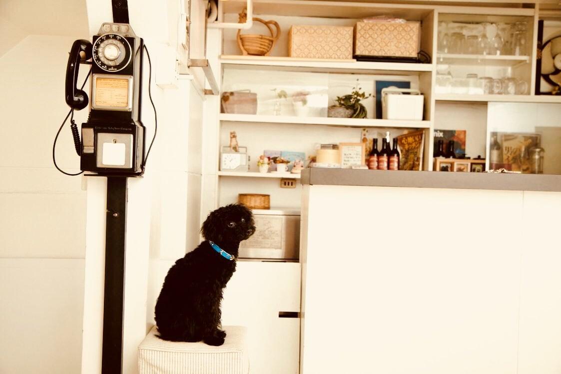 7月29日(日)12:45開催チャリティわんこフォトセッション〜愛犬の記念撮影会〜のイメージその4