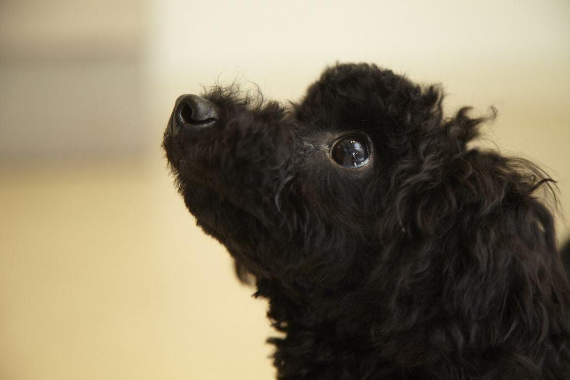 7月29日(日)12:45開催チャリティわんこフォトセッション〜愛犬の記念撮影会〜のイメージその3