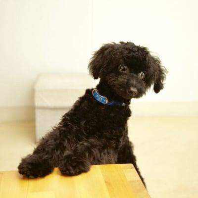 7月29日(日)15:00開催チャリティわんこフォトセッション〜愛犬の記念撮影会〜のイメージその2