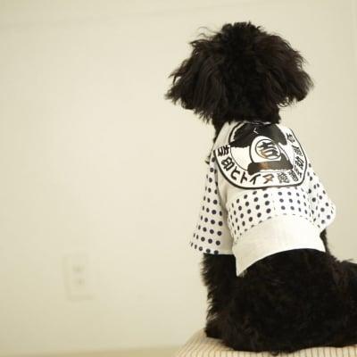 7月29日(日)18:45開催チャリティわんこフォトセッション〜愛犬の記念撮影会〜
