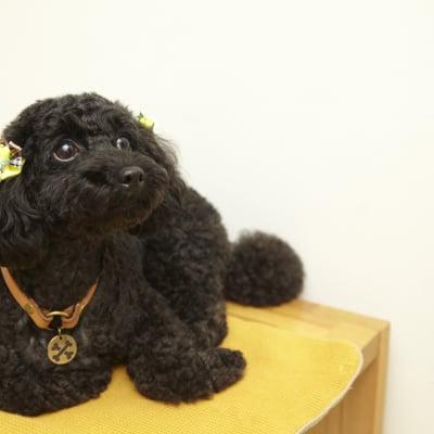 9月30日(日)11:15開催チャリティわんこフォトセッション〜愛犬の記念撮影会〜