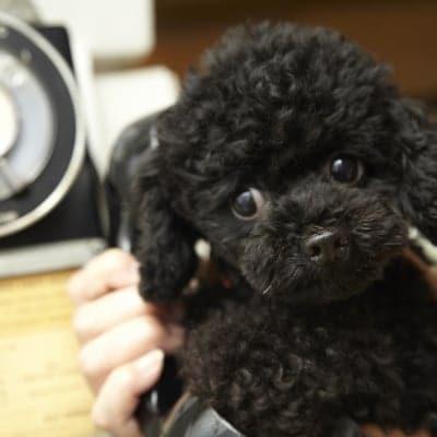 Y様専用9月30日(日)13:30開催チャリティわんこフォトセッション〜愛犬の記念撮影会〜