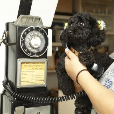 KM様専用金額修正分9月30日(日)16:00開催チャリティわんこフォトセッション〜愛犬の記念撮影会〜