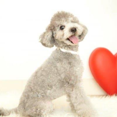 12月2日(日)M様用 開催チャリティわんこフォトセッション〜愛犬の記念撮影会〜