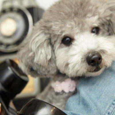 6月23日(日)14:00開催チャリティわんこフォトセッション〜愛犬の記念撮影会〜大崎