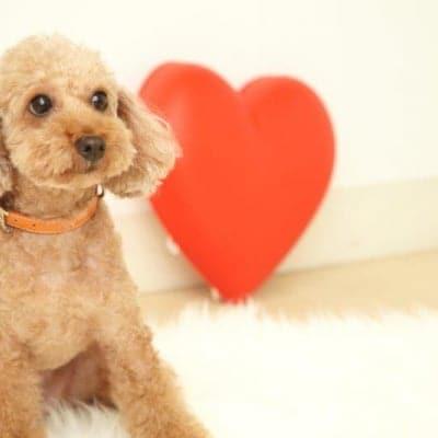 6月23日(日)12:45開催チャリティわんこフォトセッション〜愛犬の記念撮影会〜大崎