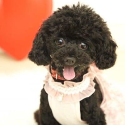 12月2日(日)14:15開催チャリティわんこフォトセッション〜愛犬の記念撮影会〜