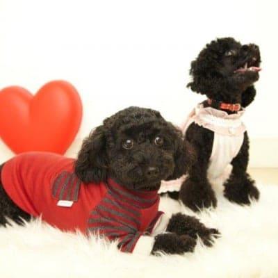12月2日(日)17:00開催チャリティわんこフォトセッション〜愛犬の記念撮影会〜